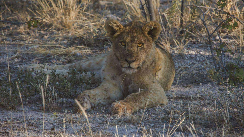 upoznavanje brzine safarija